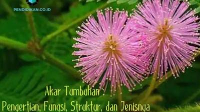 Akar Tumbuhan : Pengertian, Fungsi, Struktur, dan Jenisnya